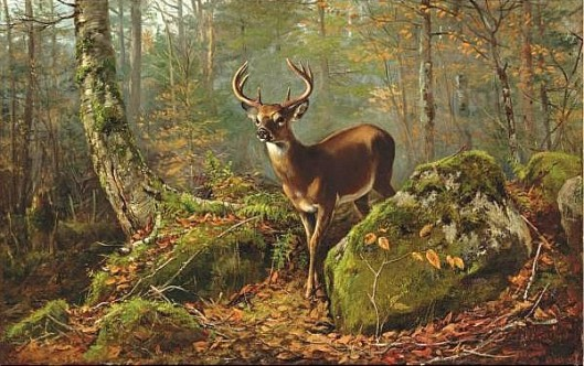 Buck In The Forest