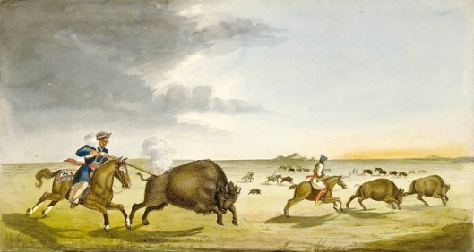 Buffalo Hunting In The Summer