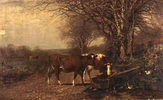 Cows At A Trough