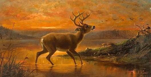 Ten Point Buck At Evening Twilight