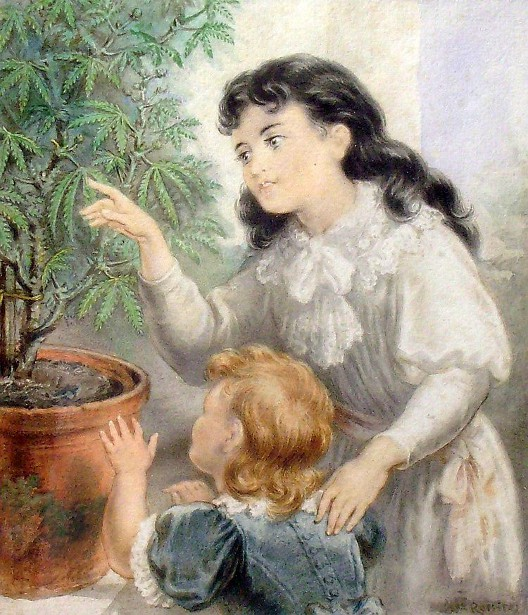 This Ol' Plant