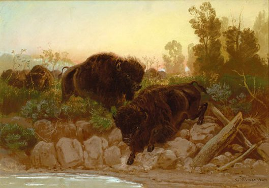 Buffaloes Approaching Water Hole