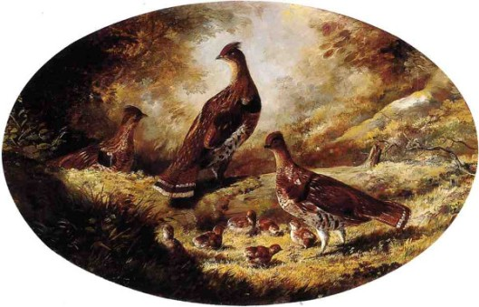 Grouse Family