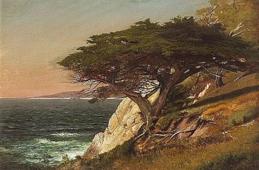 Cypress Tree, Carmel Bay